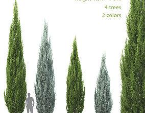 Juniperus scopulorum 02 3D