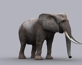 animated ELEPHANT GAME READY ANIMATED MODEL