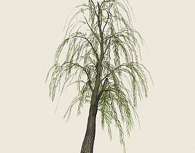 Game Ready Willow Tree 05 3D asset