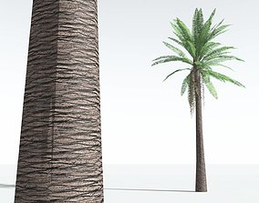 3D asset EVERYPlant Date Palm LowPoly 10 --10 Models--