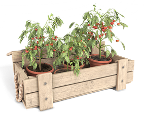 3D Tomato Plants in Wooden Crate