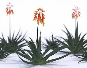 Aloe Vera Flower 3D model