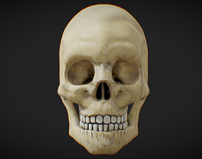 Low Poly PBR Anatomical Human Male Skull 3D asset