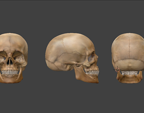 Realistic Human Skull with textures 3D model