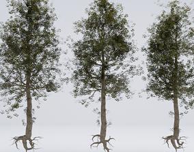 Standard european tree 3 pieces 3D bark