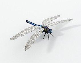 3D asset realtime Dragonfly