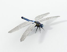 Dragonfly 3D model game-ready