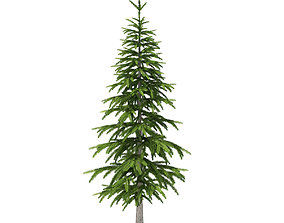 3D Fir Tree 2point6m