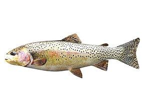 Brown Trout Fish Salmo Trutta 3D