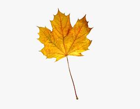 3D model Maple leaf