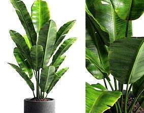 3D vase Banana tree