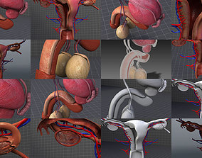 3D model Male and Female Reproductive System