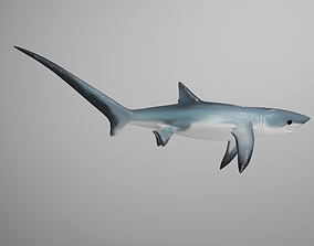 Thresher Shark 3D model