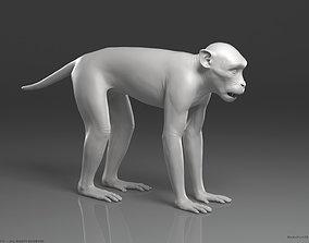 Rhesus Macaque Monkey - Highpoly Sculpture 3D model