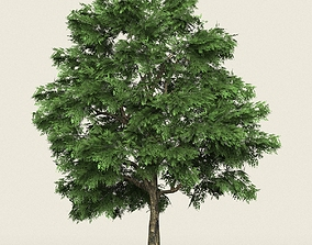 3D asset Game Ready Forest Tree 03