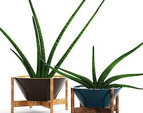 3D model Sansevieria cylindrica set 2