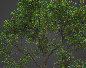 2021 PBR Japanese Crab Apple Collection - Malus 3D model