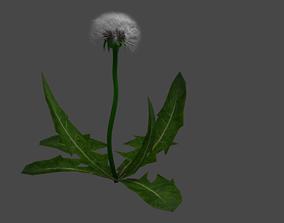 grass dandelion 3D