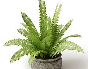 3D model Potted Light Green Sago Cycas