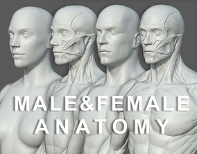 3D model Character - Male and Female Anatomy Body Base