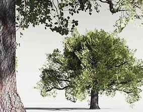 realtime EVERYPlant English Oak LowPoly 11 -- 10 Models