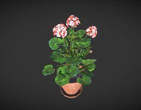 3D asset Geranium Flower