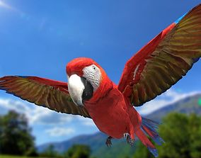 Scarlet Macaw - Animated 3D asset