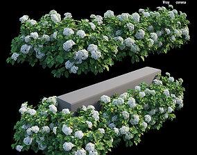 tree Hydrangea Plant set 28 3D model