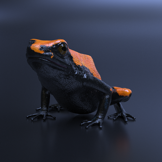 Splashback Poison Frog