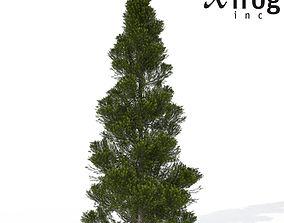 XfrogPlants Eastern Arborvitae 3D