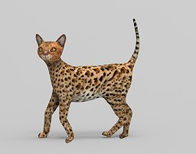 3D Cat Rigged model rigged