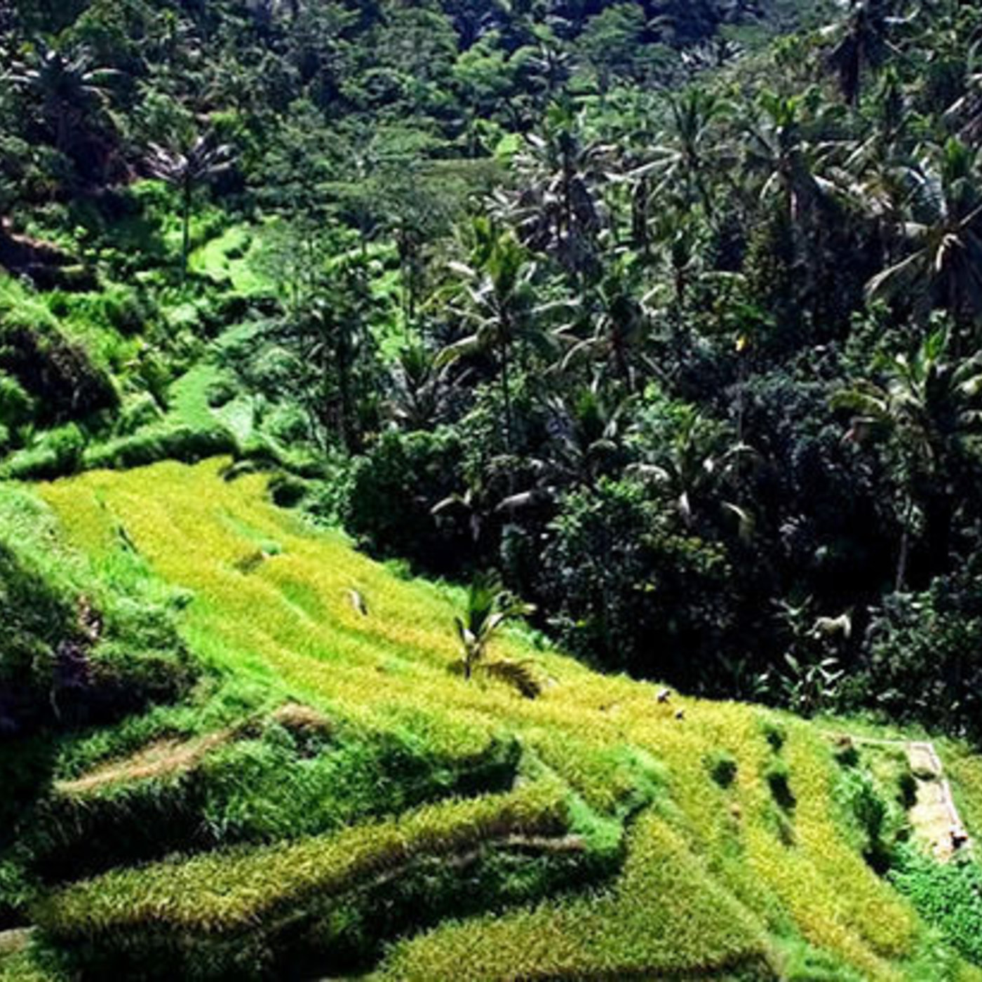 Bali Aerial Love