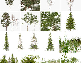 Forest Trees and Grass 3D model