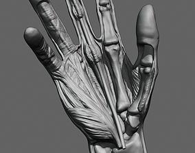 bone Hand anatomy model