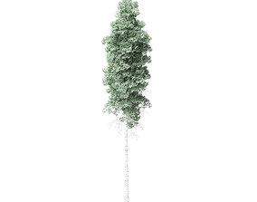 Quaking Aspen Tree 3D Model 10m