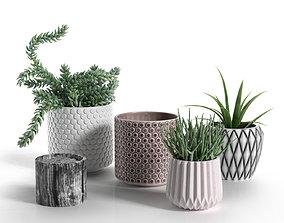 Pots with Donkey s Tail and Aloe Vera 3D model