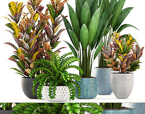 3D model Collection plants variegatum