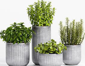 3D Decorative plant set-2