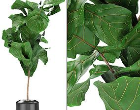 bush Plant in Pot Flowerpot Exotic Plant 3D