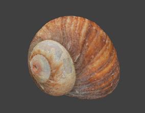3D model Moon Shell Photoscan