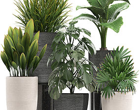 3D model Collection of exotic plants in pots 10