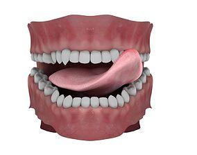 3D model character Teeth and Tongue Rigged