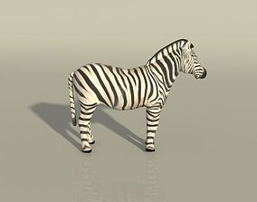 Zebra 3D augmented
