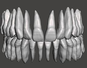 3D print model Real human teeth anatomy maxillary and