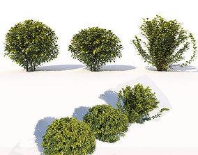 3D Laurus nobilis 02