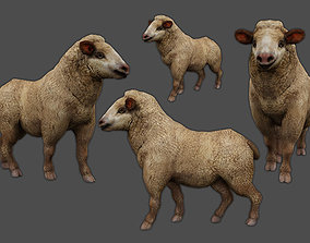 3D asset animated Merino