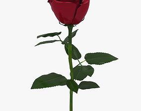 Rose Flower 3D asset