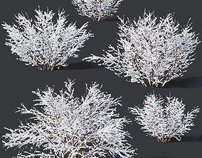 3D Forsythia Nr9 -Winter - 7 sizes