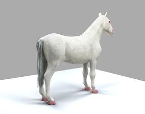 Animal 3D Models | CGTrader