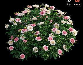3D doannguyen Rose plant set 26